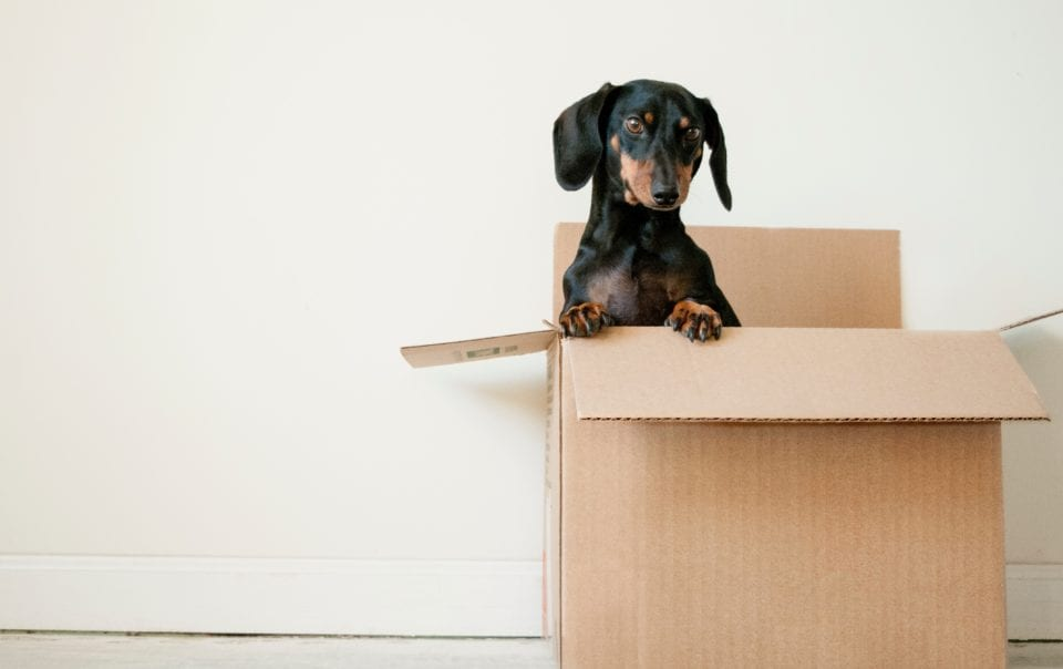 How to pack moving boxes SimpleMoves.ca